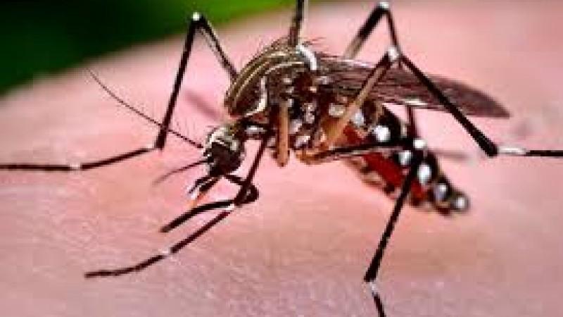 Zika vírus: Doze grupos tentam desenvolver vacinas, diz OMS