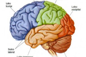 Vida e Saúde: Curiosidade pode aumentar a memória