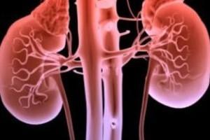 Vida e Saúde: Teste de urina pode prever insuficiência renal grave
