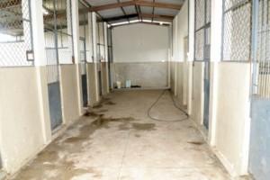 Manhuaçu: Canil Municipal terá nova estrutura. TAC foi assinado