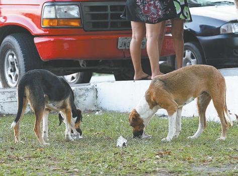caes-perambulam-ruas-Manaus-donos_ACRIMA20130325_0088_15