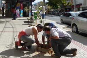 Manhuaçu: Secretaria de Agricultura planta novas árvores no centro da cidade