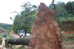 Conceição de Ipanema: Chuva e ventania causam prejuízos na zona rural