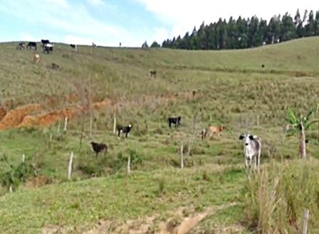 gado-fervedouro