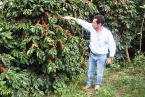Manhuaçu: Excelente expectativa para a safra de café