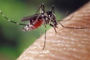 Manhuaçu: Cidade registra caso suspeito de Chikungunya