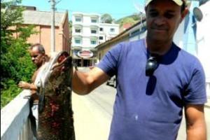 Carangola: Mortandade de peixes assusta a população