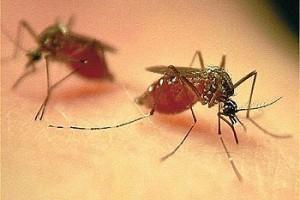 Cuidados para eliminar o Aedes aegypti devem ser redobrados no período de férias