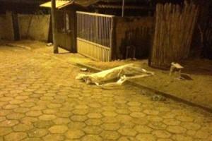Pingo D'água: Homem de 33 anos é assassinado
