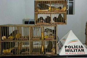 PM prende vendedores de pássaros em Simonésia