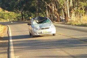 Entre Folhas: Animal solto na pista provoca acidente na MG 425