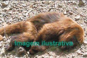 Macacos são encontrados mortos em Manhuaçu. Aumenta a atenção