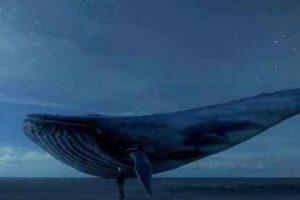 """Mensagem com suposto desafio do jogo """"Baleia azul""""  assusta população de Ipanema"""