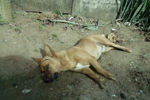 Bandidos matam cachorro durante tentativa de homicídio