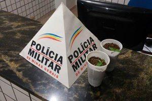 PM apreende plantas de maconha em Manhuaçu