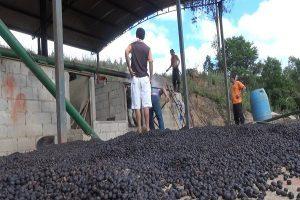 Secador de café pega fogo em Simonésia
