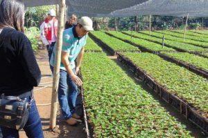 SENAR oferece curso técnico gratuito em agronegócio: inscrições abertas