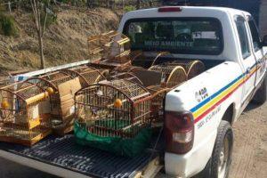 PM Ambiental apreende pássaros mantidos em cativeiro de forma irregular