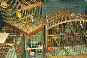 Divino: Três homens perigosos foram presos na Vila Azul