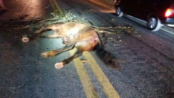 Cavalo 26 ago (8)