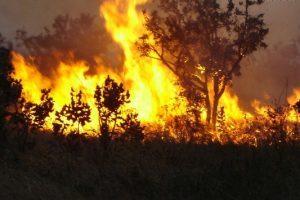Energisa alerta: Queimadas provocam prejuízos à natureza e à saúde