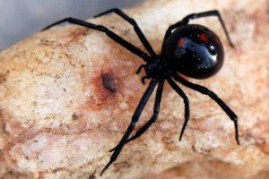 Simonésia: Morre criança picada por aranha