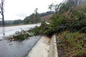 Bombeiros cortam árvores que colocam em risco usuários de rodovias