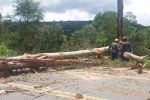 Eucalipto com risco de queda é cortado pelos Bombeiros de Manhuaçu