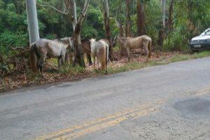 Vigilância Ambiental realiza apreensão de animais soltos nas ruas em Manhuaçu