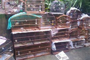 Região: Pássaros são apreendidos e multa de mais de 70 mil reais aplicada