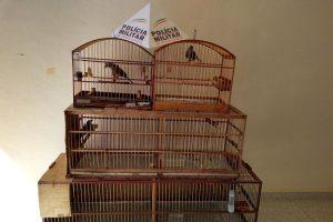 PM Ambiental apreende pássaros em Alto Jequitibá