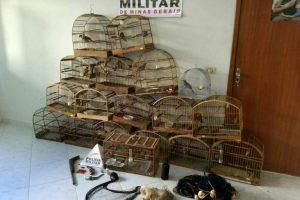 Conceição de Ipanema: PM do Meio Ambiente apreende pássaros silvestres e armas