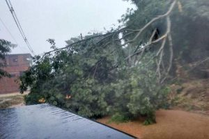 Vento forte derruba árvore sobre carro em Ipanema