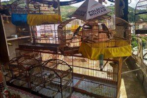 Manhumirim: Pássaros presos irregularmente são apreendidos. Multa de 55 mil reais
