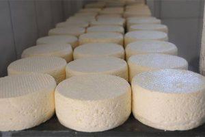 Projeto cria padrões de produção e venda do queijo Minas