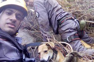 Bombeiros resgatam cadela presa em pedreira