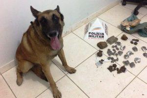 Cão da PM encontra cerca de 1 quilo de maconha no São Francisco de Assis
