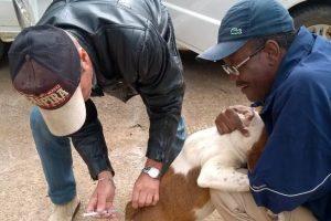 Manhuaçu: Vacinação de cães e gatos continua acelerada no município