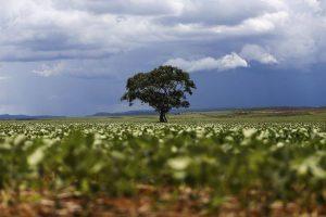 Natureza: desmatamento vem caindo, mas ainda há desafios