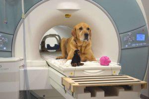 A ciência comprova que os cachorros conseguem nos compreender
