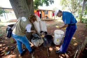 Fármaco pode eliminar vírus da chikungunya, revela pesquisa