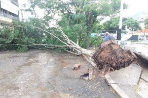 Manhuaçu: Chuva e ventos provocam queda de árvores e arrancam telhados
