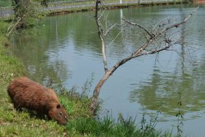 Livro Vermelho da Fauna 2018 registra 1.173 espécies sob risco