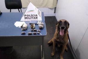 Manhuaçu: PM apreende mais drogas em mata no Bairro Nossa Senhora Aparecida