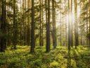 Natureza beneficia bem-estar e saúde da população, mostra pesquisa