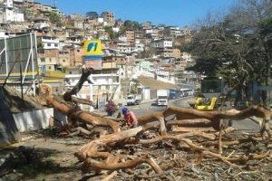 Manhuaçu: Bombeiros e Prefeitura realizam corte de árvore com risco de queda