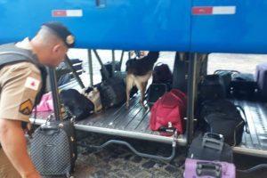 Operação Férias: PM fiscaliza ônibus em Realeza