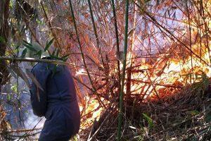 Bombeiros combatem incêndio em área de preservação ambiental