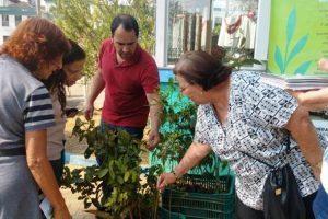 Manhuaçu: Distribuição de mudas marca Dia Mundial da Árvore