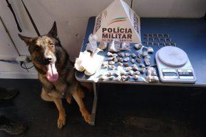 Manhuaçu: Cão de faro localiza drogas escondidas no Bairro Santana